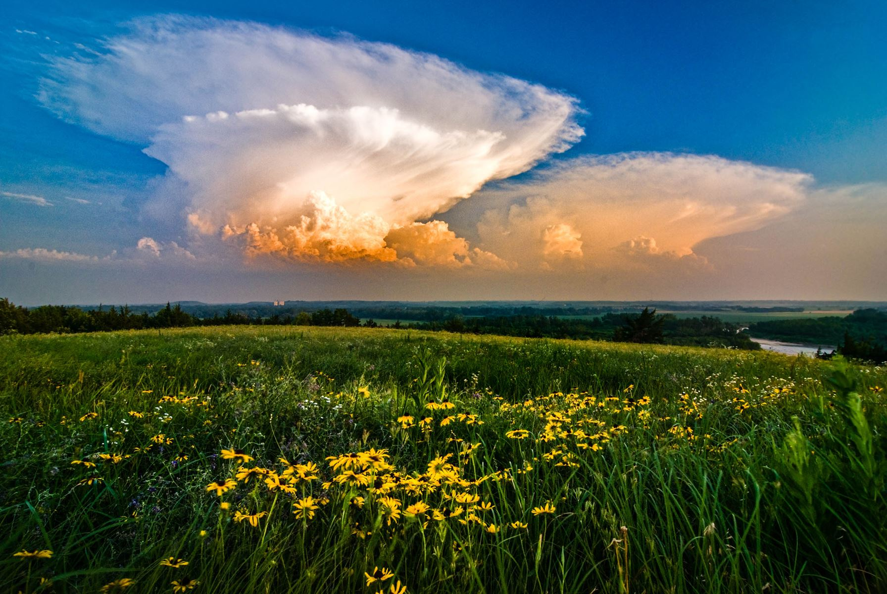 Storm clouds building over a green field with prairie flowers
